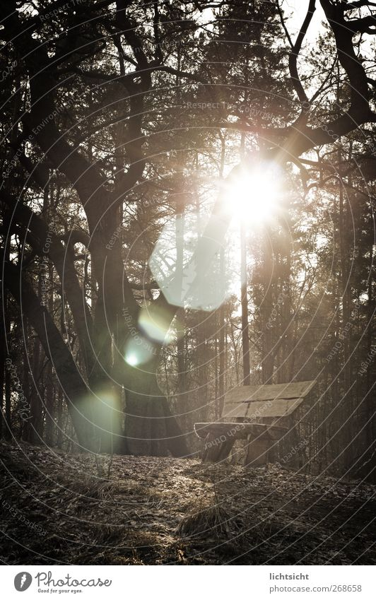 am Ziel der Reise Natur Baum Blatt ruhig Wald Erholung Landschaft Holz braun wandern Pause Idylle Bank Schönes Wetter Hügel Gipfel
