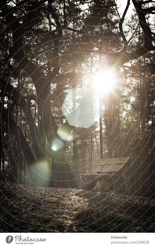 am Ziel der Reise Natur Landschaft Schönes Wetter Baum Wald Gipfel wandern braun Erholung Ewigkeit ruhig Blendenfleck Lichtspiel Lichterscheinung Lichtschein