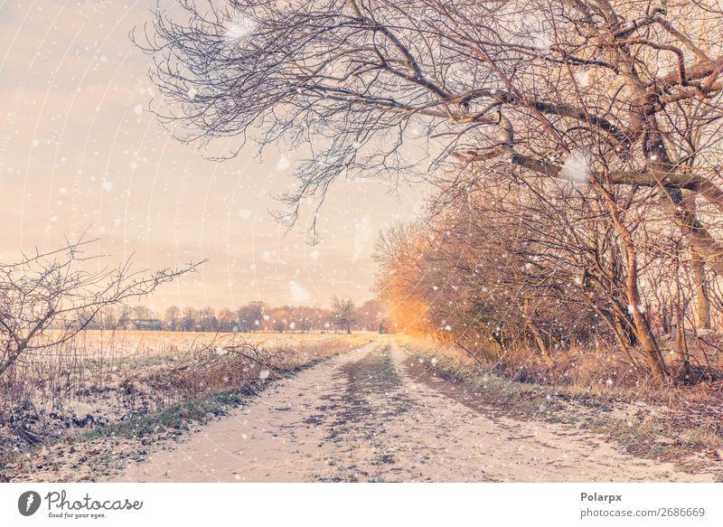 Schneefall auf einer Landstraße im Winter schön Ferien & Urlaub & Reisen Natur Landschaft Klima Wetter Baum Park Wald Straße Wege & Pfade blau braun gelb gold