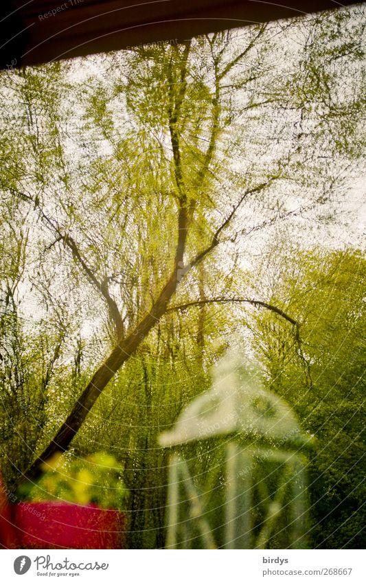 Verzerrte Wahrnehmung Dekoration & Verzierung Frühling Sommer Baum Fenster außergewöhnlich verrückt bizarr skurril Blumentopf Laterne Verzerrung Fensterscheibe