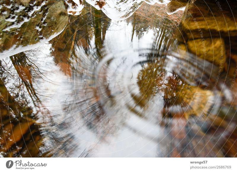 Gedankenspiele | Gravitationwellen Natur Erde Luft Wasser Herbst Baum Moos Wald Felsen Flussufer Harz nass braun grau grün Wasseroberfläche