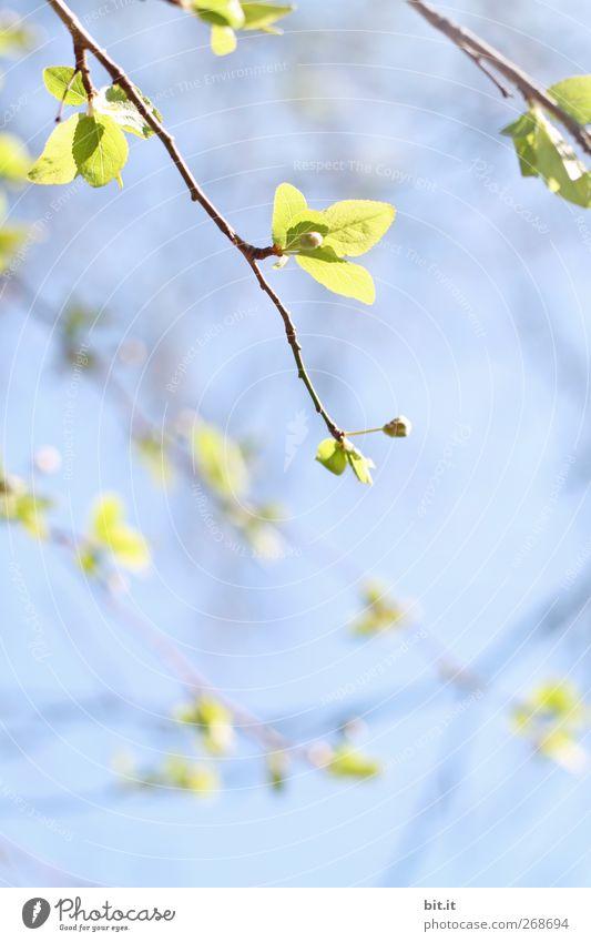 mal alles hängen lassen... Natur Pflanze blau grün Sommer Baum Erholung Blatt ruhig Blüte Frühling frisch leuchten Geburtstag Blühend Klima