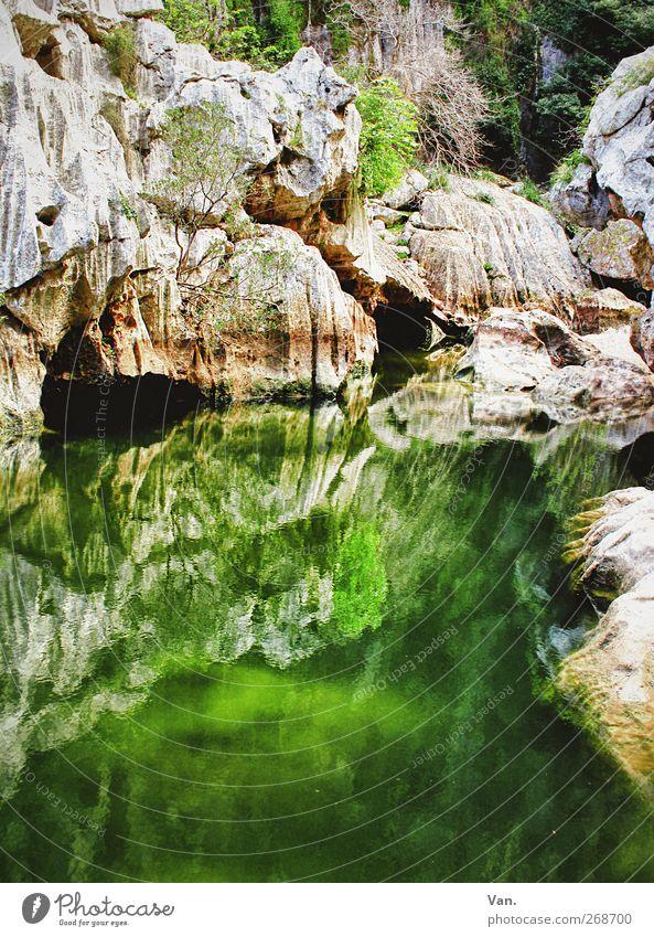 Im Grünen fischen Natur Wasser Pflanze Baum Moos Algen Felsen Berge u. Gebirge Schlucht Torrent de Pareis Teich Stein leuchten nass grün Höhle Farbfoto