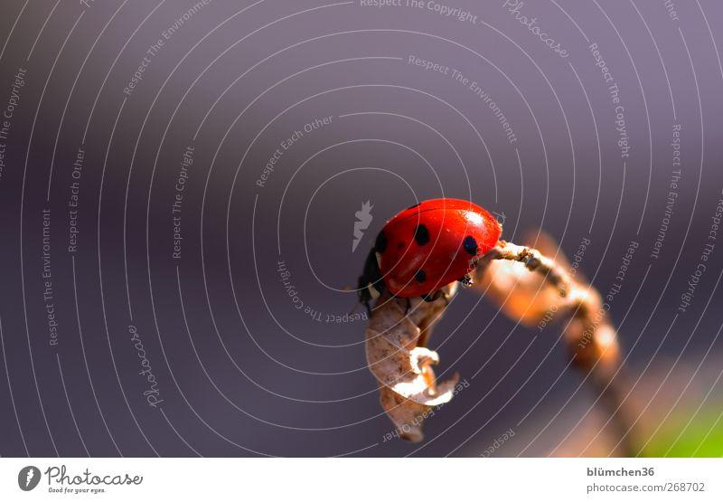 Für sally2001! Happy birthday... Natur Frühling Sommer Käfer Marienkäfer Tier Zeichen ästhetisch positiv rot Gefühle Hoffnung Lebensfreude Zufriedenheit