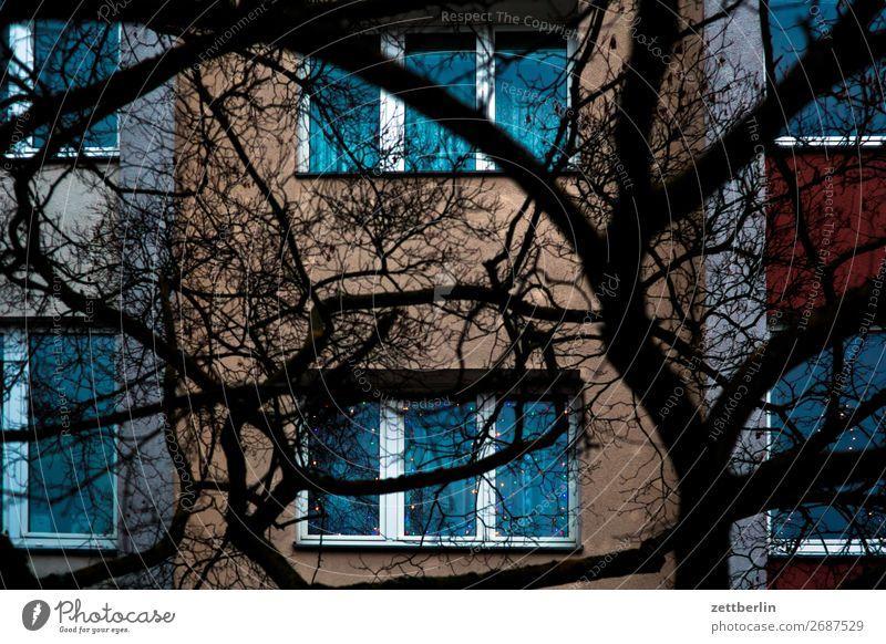 Fassade Stadt Baum Haus Fenster dunkel Textfreiraum Häusliches Leben Wohnung Ast Baumstamm Wohnhaus Zweig Wohnhochhaus Wohngebiet Mehrfamilienhaus