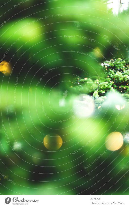 Schöne Weihnachten Feste & Feiern Weihnachten & Advent leuchten Duft Fröhlichkeit Kitsch gelb grün Vorfreude Erwartung Glaube Religion & Glaube Weihnachtsbaum