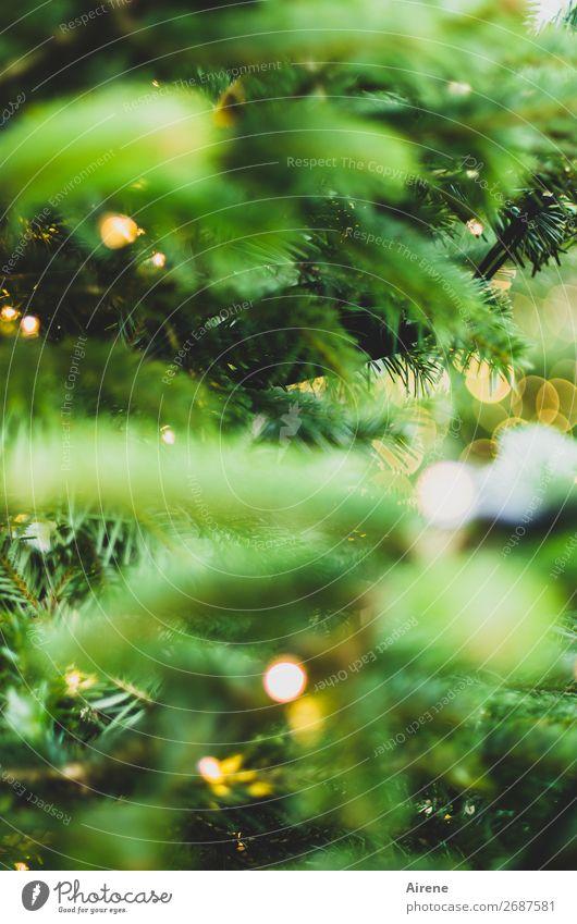 Lichterbaum III Weihnachten & Advent Weihnachtsbaum Dekoration & Verzierung Kerze leuchten gelb grün Gefühle Freude Vorfreude Hoffnung Glaube Religion & Glaube