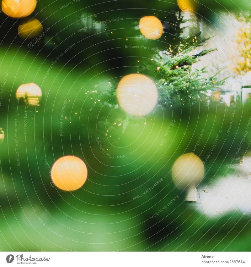 Lichterbaum I Weihnachtsbaum Weihnachten & Advent Baum Kerze Lichterkette leuchten glänzend gelb grün Gefühle Stimmung Glaube Religion & Glaube Hoffnung