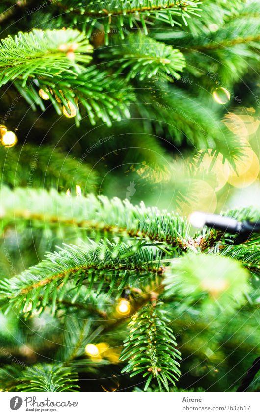 Lichterbaum V Weihnachten & Advent Weihnachtsbaum Dekoration & Verzierung Kerze leuchten gelb grün Gefühle Lebensfreude Vorfreude Hoffnung Glaube