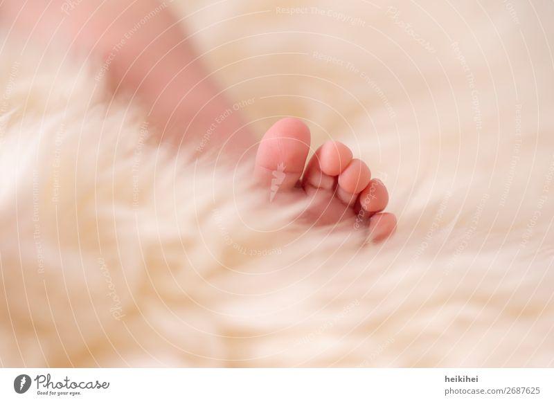 Newborn Haut harmonisch Zufriedenheit Erholung ruhig Wohnung Mensch Baby Beine Fuß 1 0-12 Monate liegen schlafen Gesundheit Glück kuschlig klein niedlich schön