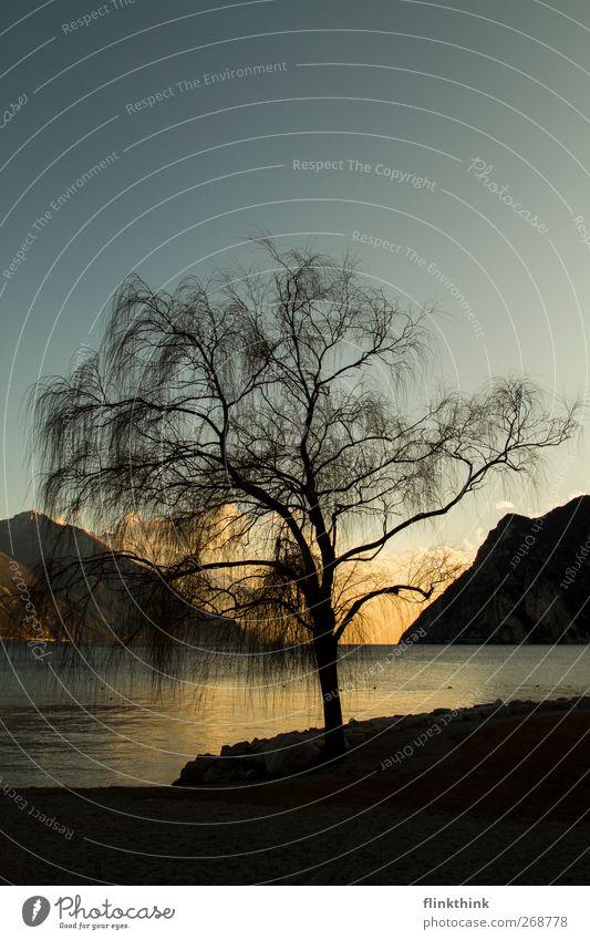 Baum am See Umwelt Natur Landschaft Wasser Himmel Wolken Sonne Sonnenaufgang Sonnenuntergang Sonnenlicht Frühling Sommer Schönes Wetter Park Hügel Felsen