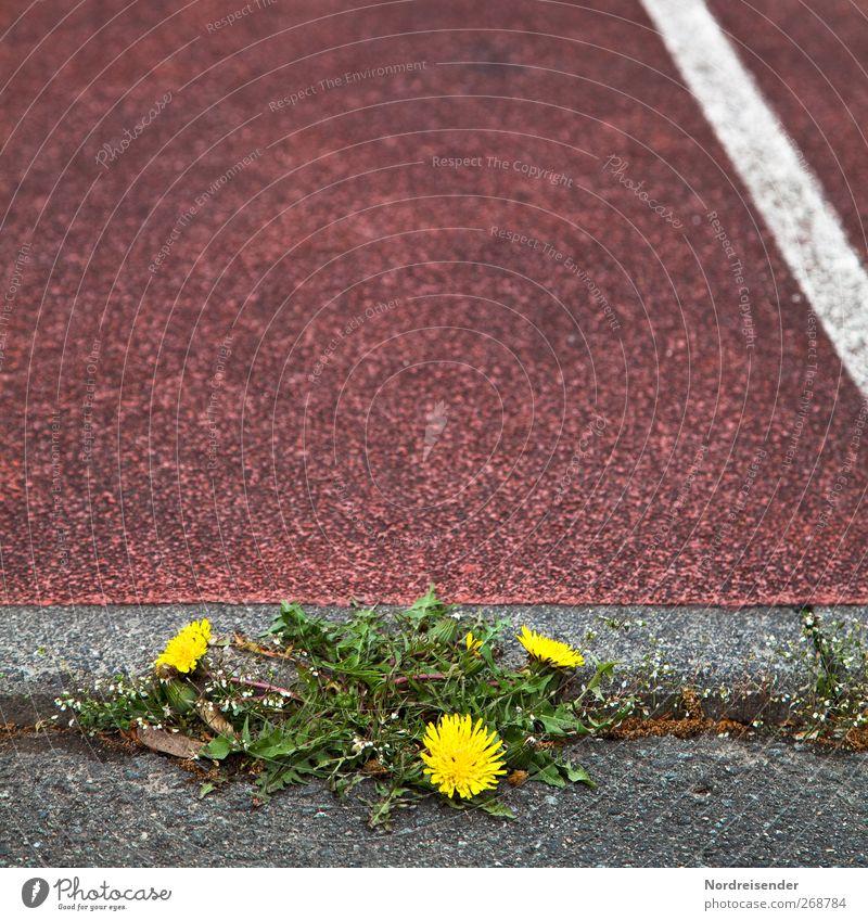 Durchsetzungsvermögen Natur schön Pflanze Straße Sport Frühling Wege & Pfade Linie Gesundheit Kraft Erfolg Platz Wachstum frisch ästhetisch Schnur