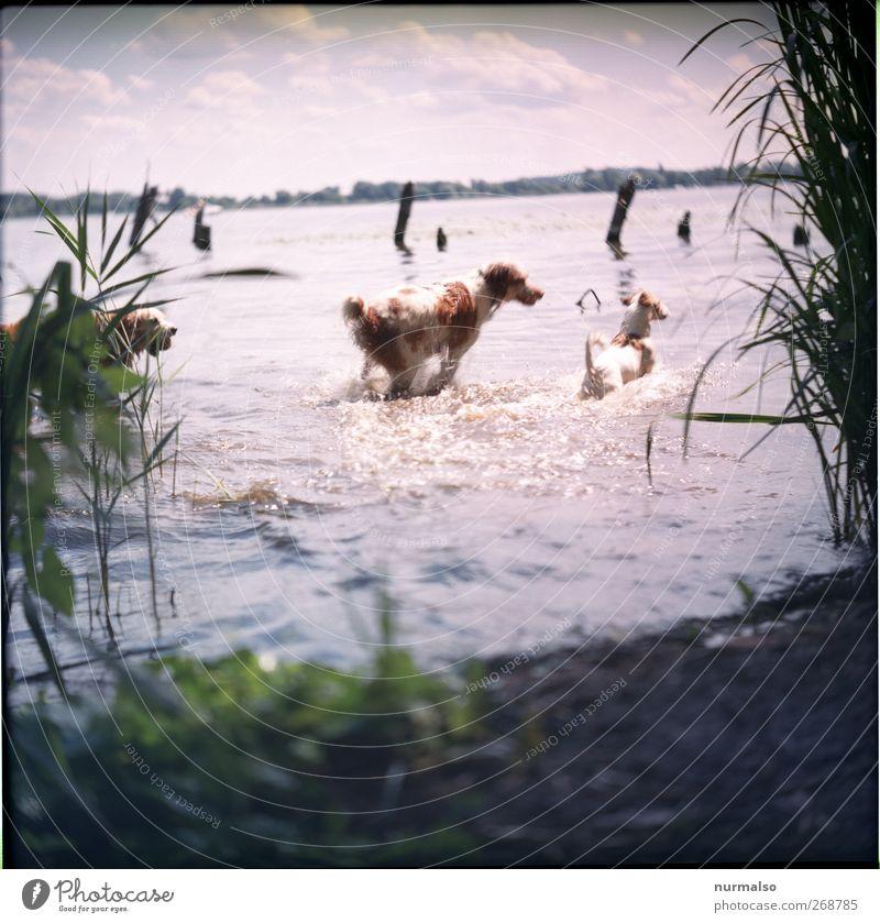 Hunde im Wasser Freizeit & Hobby Spielen Natur Landschaft Pflanze Tier Schönes Wetter Wellen Küste Flussufer Haustier 2 Jagd rennen Schwimmen & Baden trashig