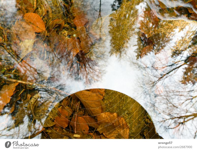 Reflexionen Umwelt Natur Pflanze Erde Luft Wasser Himmel Herbst Winter Schönes Wetter Baum Blatt Wald Flussufer Harz beobachten träumen Ferne nah nass natürlich