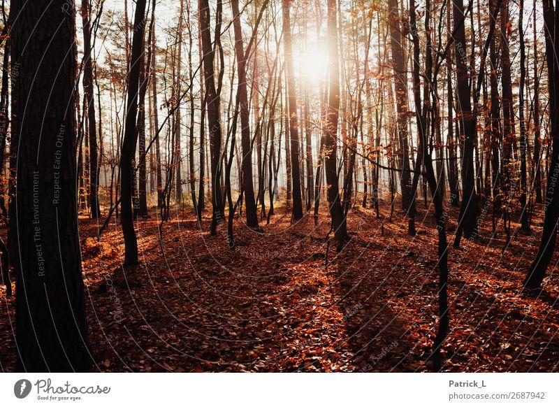 Herbstwald Natur Pflanze Klimawandel Schönes Wetter Baum Sträucher Blatt Grünpflanze Wildpflanze Laubwald Laubbaum Wald Mischwald Jagd Ferien & Urlaub & Reisen
