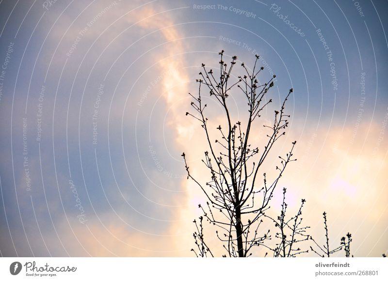 Feuer Himmel Natur blau weiß Ferien & Urlaub & Reisen schön Baum Sommer Umwelt Gefühle Frühling Freiheit Stimmung Horizont Kraft natürlich