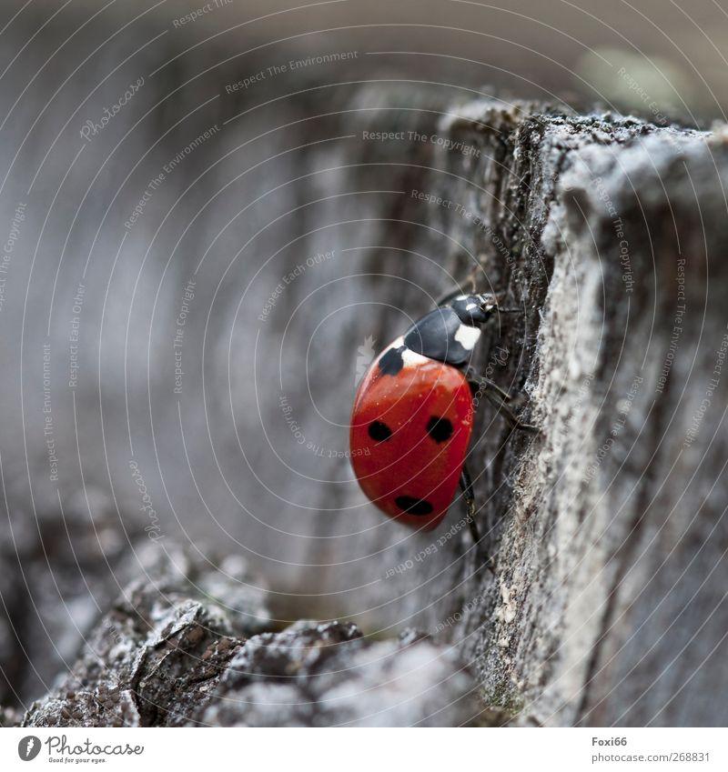 wo sind all die Blumen hin....? Natur Luft Frühling Baum Käfer Marienkäfer 1 Tier Holz Unendlichkeit natürlich rot schwarz weiß Bewegung Energie Erholung