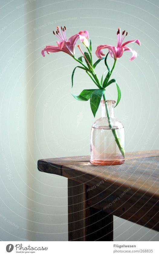 Vielen Dank für die Blumen Pflanze schön Wasser Blume Blatt Liebe Gefühle Blüte Glas Tisch Romantik Sauberkeit exotisch Schalen & Schüsseln Flasche Ruhestand