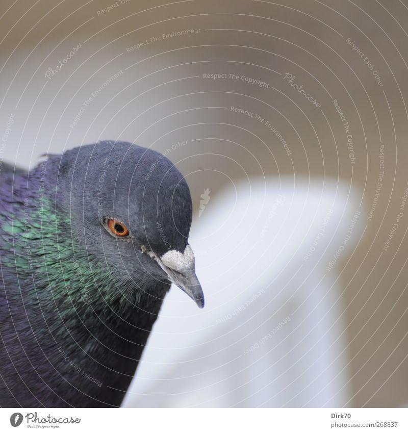 Skeptiker der Lüfte weiß grün Tier grau Garten Vogel Park braun Wildtier glänzend warten wild Sicherheit bedrohlich beobachten Neugier
