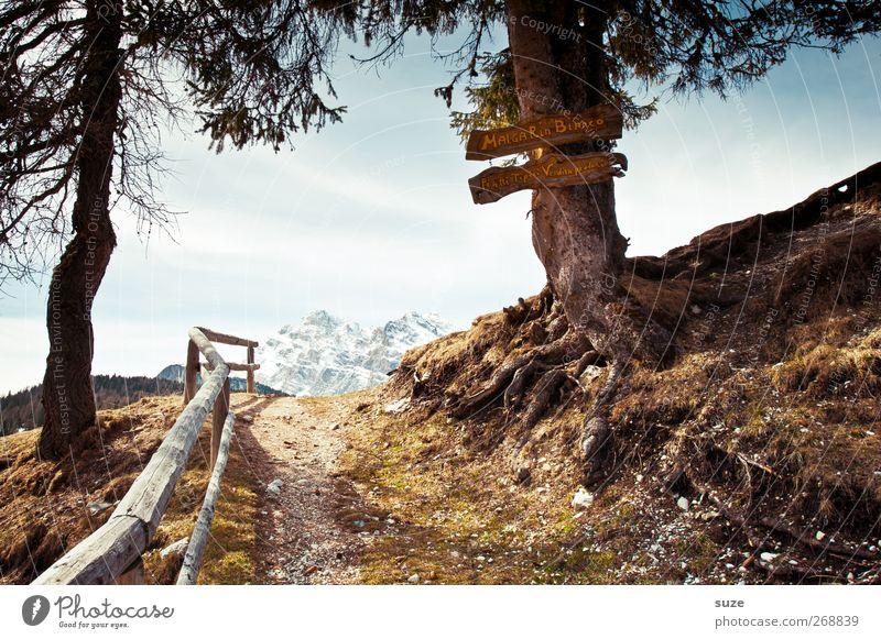 Wanderziel Umwelt Natur Landschaft Pflanze Urelemente Erde Himmel Wolkenloser Himmel Frühling Klima Schönes Wetter Baum Hügel Alpen Gipfel Schneebedeckte Gipfel
