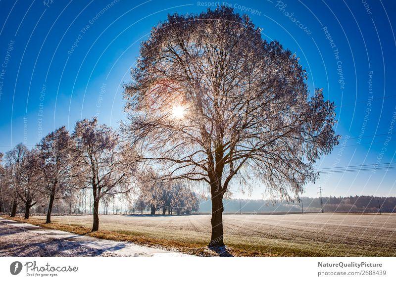 Winter frost in Allgaeu Ferien & Urlaub & Reisen Natur Weihnachten & Advent Sommer Erholung ruhig Freude Ferne Berge u. Gebirge Hintergrundbild Leben Schnee