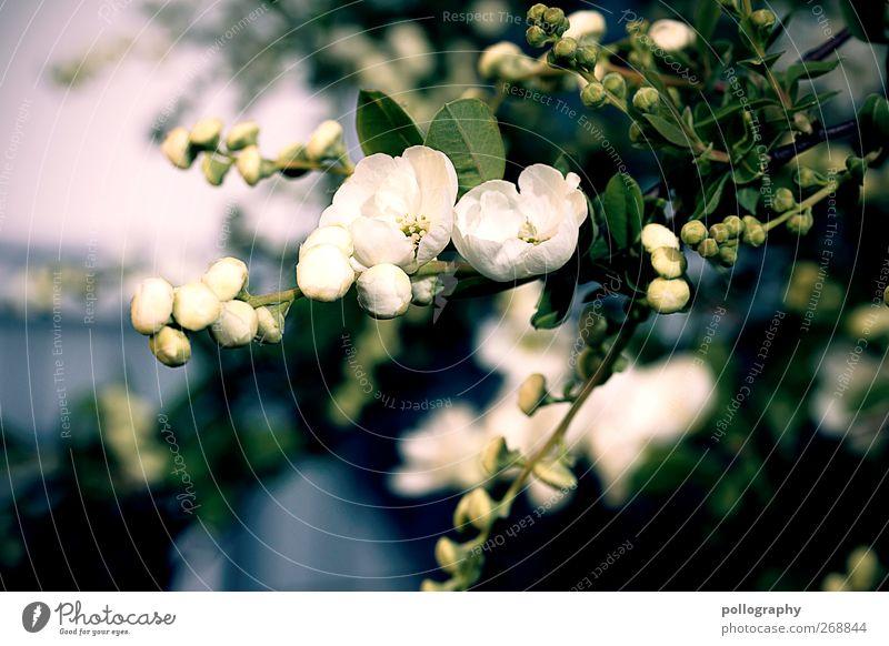 Entfaltung Natur Pflanze Frühling Sommer Schönes Wetter Blume Sträucher Blatt Blüte Grünpflanze Garten Wiese Blühend klein Wärme gelb gold Frühlingsgefühle