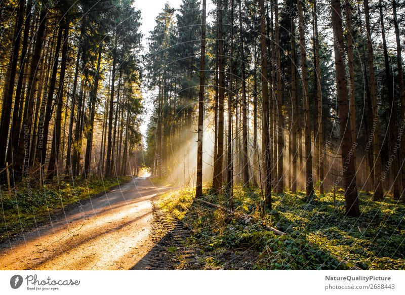 Sunbeams in the forest Ferien & Urlaub & Reisen Natur Pflanze Baum Erholung Tier ruhig Freude Wald Winter Ferne Hintergrundbild Herbst Umwelt Wege & Pfade Sport
