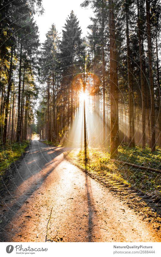 Sunbeams in the forest Ferien & Urlaub & Reisen Natur Pflanze Sonne Erholung Tier ruhig Freude Wald Winter Ferne Leben Herbst Umwelt Wege & Pfade Bewegung