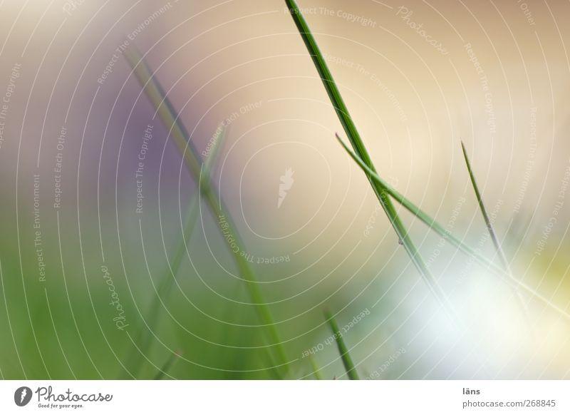 wachsen lassen Natur grün Pflanze Umwelt Gras Wachstum Halm Grasland Graswiese