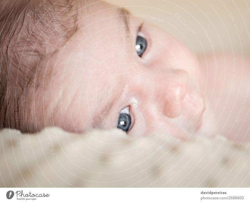 Porträt eines Neugeborenen, das sich über eine Decke legt. Lifestyle Glück schön Körper Haut Gesicht Leben Erholung Kind Mensch Baby Junge Kindheit Liebe