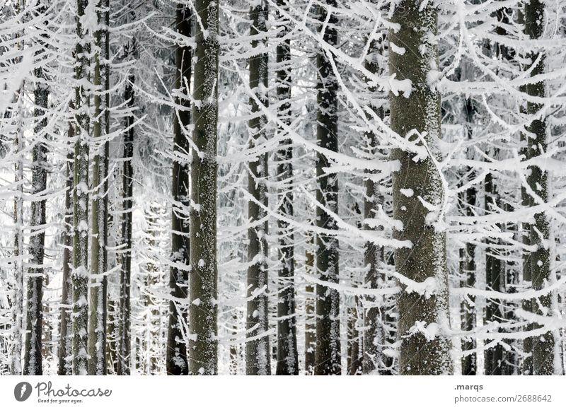 Eiskalt Natur Baum Wald Winter Schnee Nadelbaum
