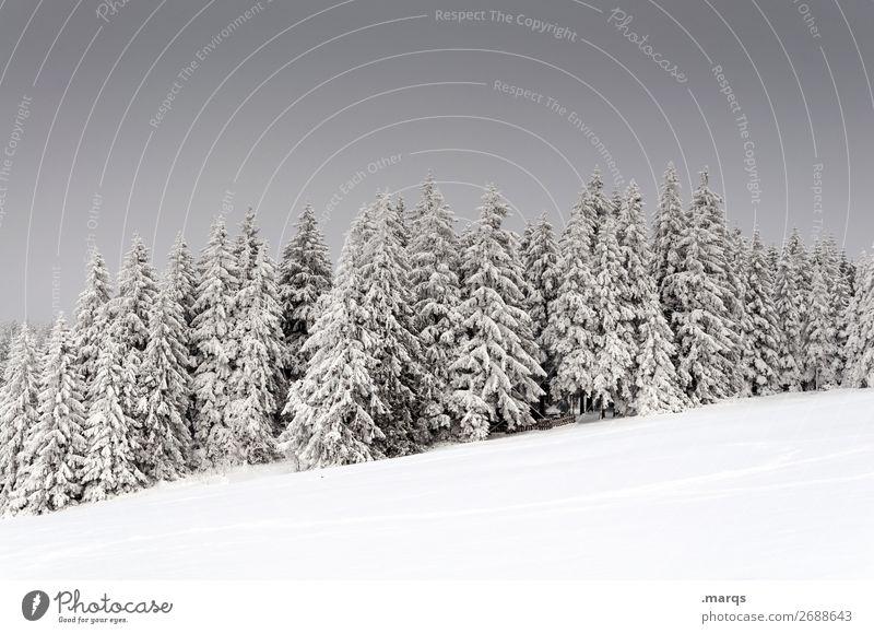 Tiefer Winter Ferien & Urlaub & Reisen Schnee Natur Landschaft Pflanze Himmel Eis Frost Baum Wald kalt schön Stimmung Fichtenwald Schwarzwald Farbfoto