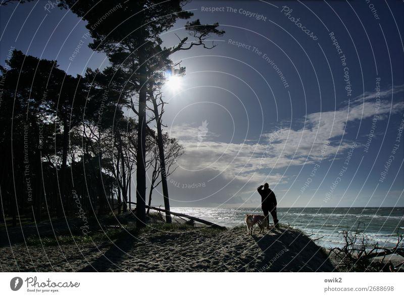 Sigismund Rüstig Mann Erwachsene 1 Mensch Umwelt Natur Landschaft Pflanze Himmel Wolken Horizont Sonne Schönes Wetter Baum Küste Ostsee Weststrand Hund Tier