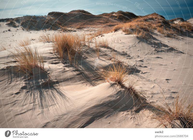 Sand und Gräser Umwelt Natur Landschaft Pflanze Luft Himmel Wolken Horizont Herbst Schönes Wetter Wind Sträucher Hügel Wüste Slowinski Nationalpark Polen