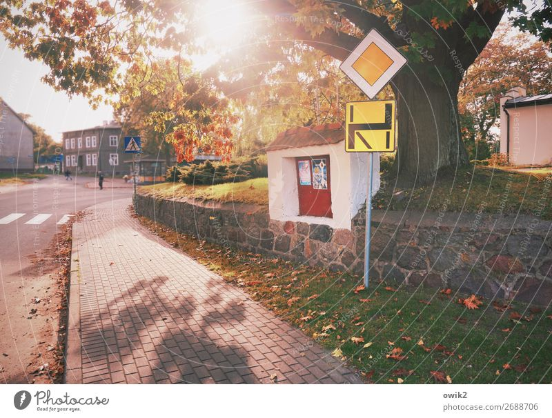 Navi Baum Haus Straße Herbst Gras Verkehr leuchten Bürgersteig Dorf Verkehrswege Straßenkreuzung bevölkert Verkehrszeichen Verkehrsschild Polen Hauptstraße