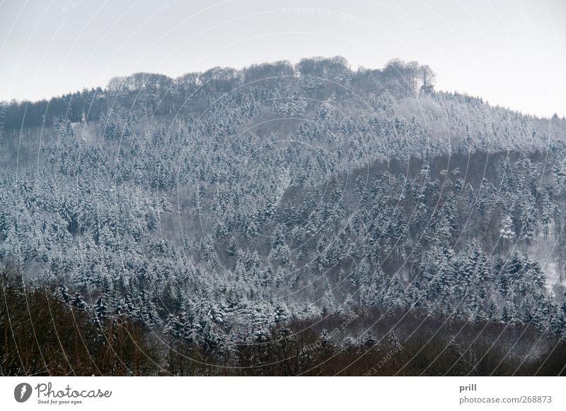 Winterwald in Hohenlohe Natur Baum Pflanze Wolken Wald Landschaft kalt Hintergrundbild Frost Idylle Ast gefroren Zweig ländlich trüb