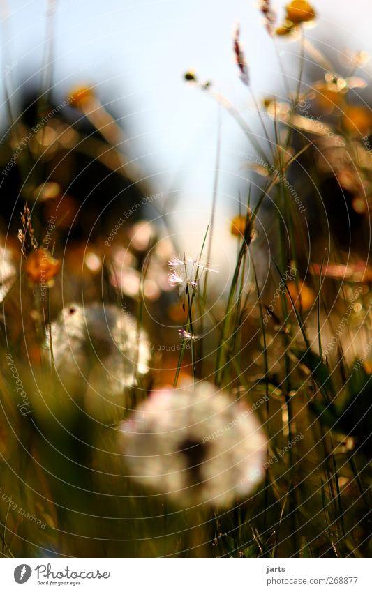 frühlingswiese Natur Landschaft Frühling Sommer Schönes Wetter Pflanze Blume Gras Sträucher Blatt Blüte Grünpflanze Wildpflanze Wiese einfach frisch natürlich