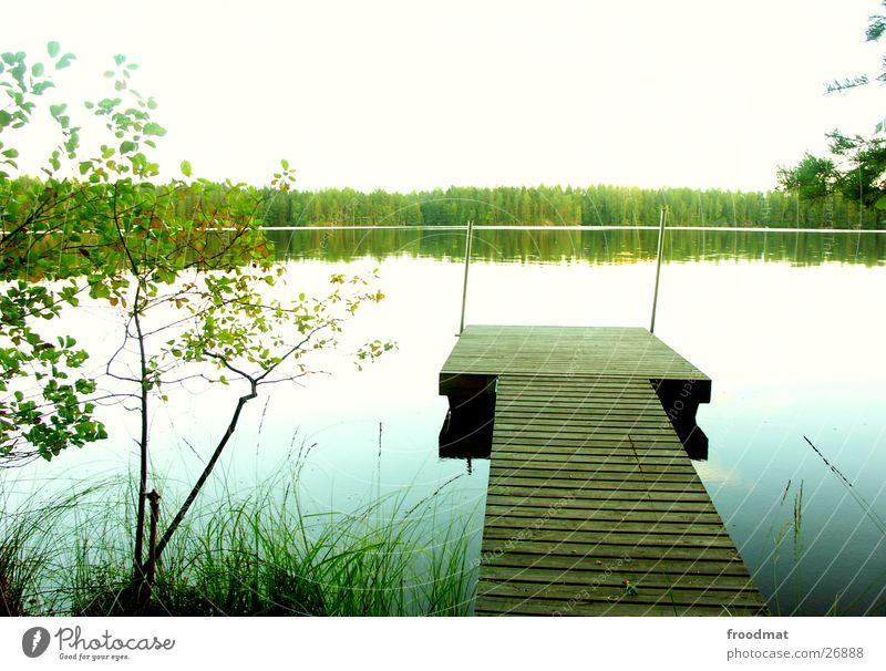 vollkommene Stille Steg Finnland See Baum ruhig Spiegel Wasseroberfläche himmlisch Wald kalt Erholung Gras Schilfrohr Strand grün Überbelichtung weiß Amerika
