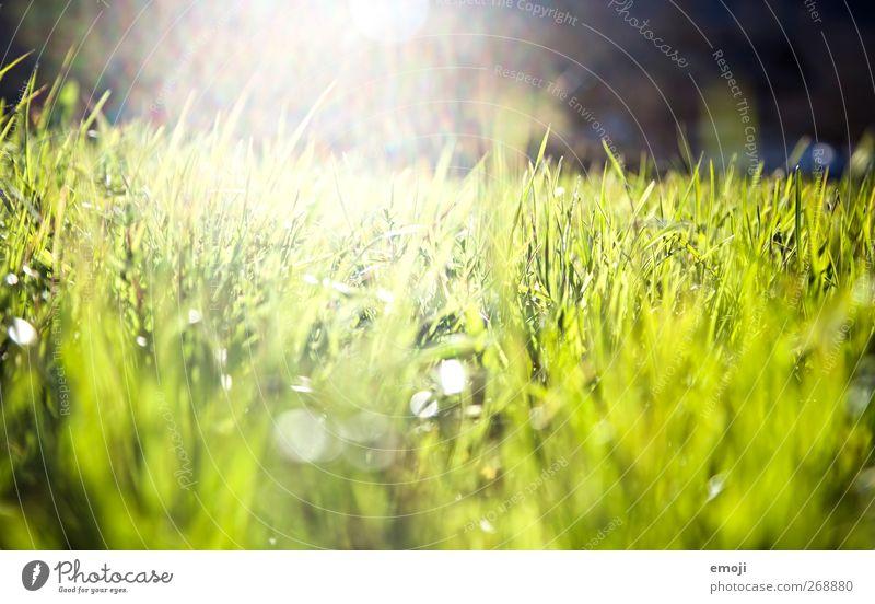 splash* Natur grün Sonne Sommer Umwelt Landschaft Wiese Gras Garten Park Feld frisch Schönes Wetter