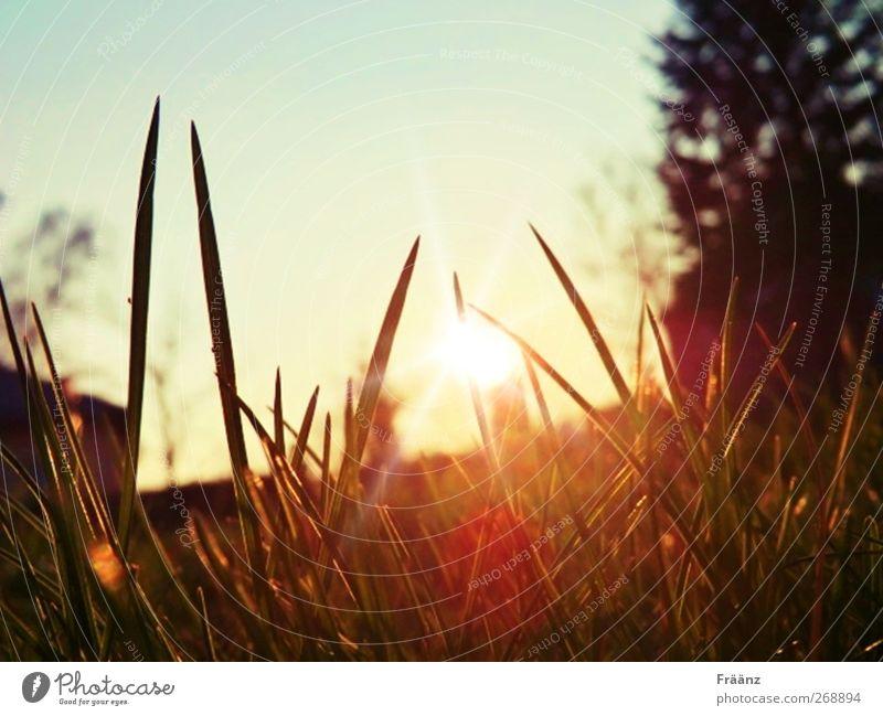 the sunset Natur Landschaft Himmel Sonne Sonnenaufgang Sonnenuntergang Sonnenlicht Frühling Schönes Wetter Gras Garten Denken genießen Blick träumen verblüht