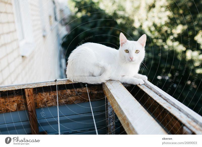 süße weiße Katze mit Blick vom Balkon aus Lifestyle elegant Freizeit & Hobby Häusliches Leben Wohnung Haus Sommer Schönes Wetter Garten Park Kleinstadt Stadt