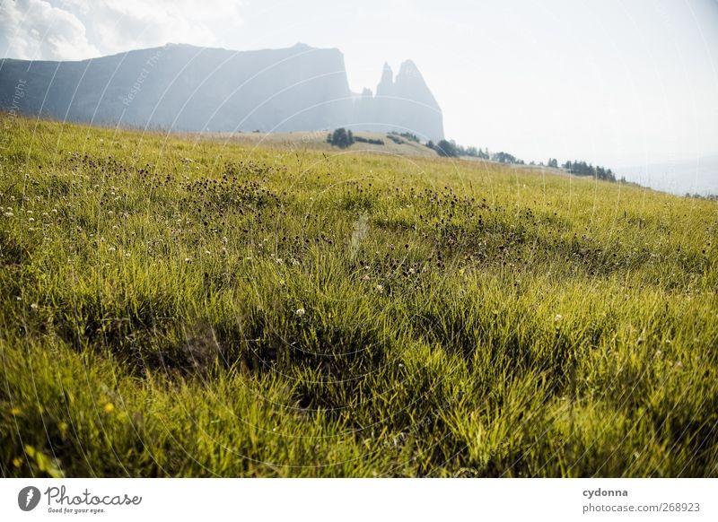 Schlern in der Abendsonne Natur Ferien & Urlaub & Reisen Sommer ruhig Erholung Ferne Umwelt Landschaft Wiese Leben Berge u. Gebirge Gras Wege & Pfade träumen Horizont wandern