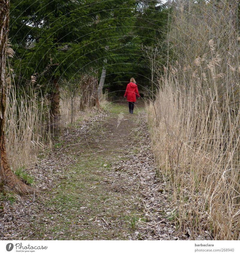 Was wird sein? Frau Natur Jugendliche rot Pflanze ruhig Erwachsene Wald Umwelt Landschaft dunkel Gefühle Bewegung Frühling Wege & Pfade Junge Frau