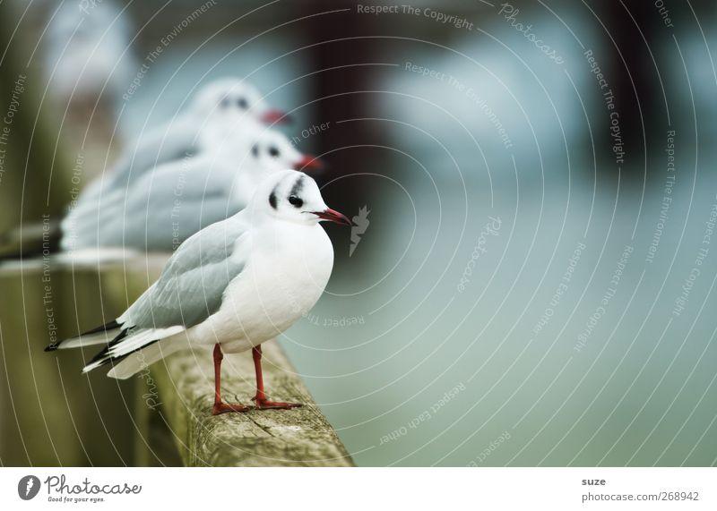 Möwen von der Stange Natur weiß Tier Umwelt kalt Holz klein lustig Vogel Wildtier natürlich warten authentisch stehen Urelemente Tiergruppe