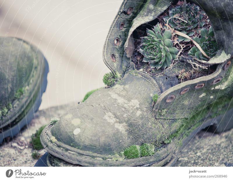 Siebenmeilenstiefel alt grün natürlich außergewöhnlich Wachstum dreckig stehen paarweise Vergänglichkeit kaputt Wandel & Veränderung Moos trashig nachhaltig skurril Geborgenheit