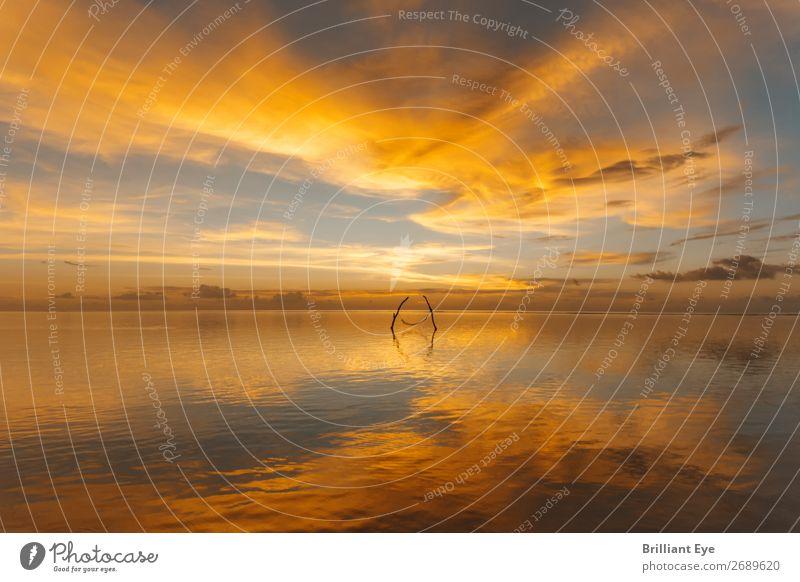 goldene Idylle Erholung ruhig Ferien & Urlaub & Reisen Ferne Freiheit Sommer Strand Natur Landschaft Wasser Horizont Sonnenaufgang Sonnenuntergang exotisch hell