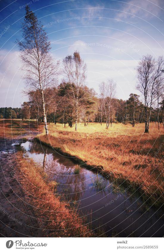 Nasse Füße Umwelt Natur Landschaft Pflanze Wasser Himmel Wolken Horizont Herbst Schönes Wetter Baum Gras Sträucher Park Moor Sumpf Bach Pietzmoor
