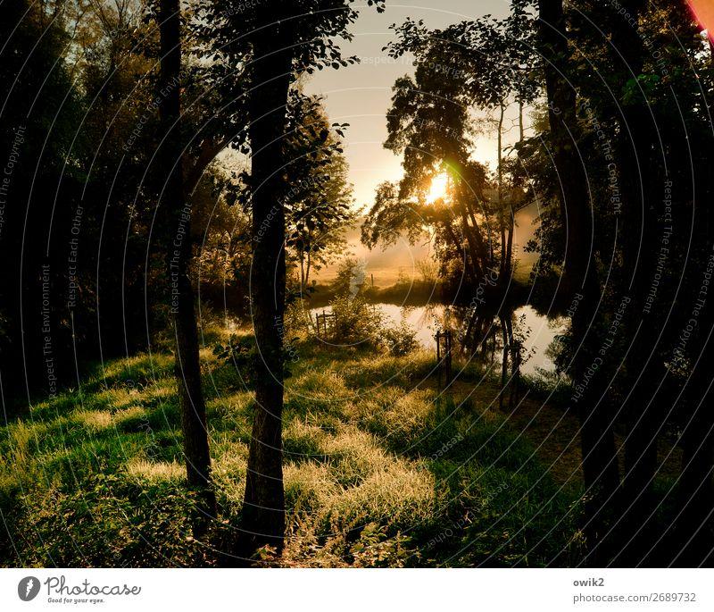 Wald- und Wiesenfoto Umwelt Natur Landschaft Pflanze Wolkenloser Himmel Sonne Herbst Schönes Wetter Nebel Baum Gras Sträucher Bach glänzend leuchten gigantisch