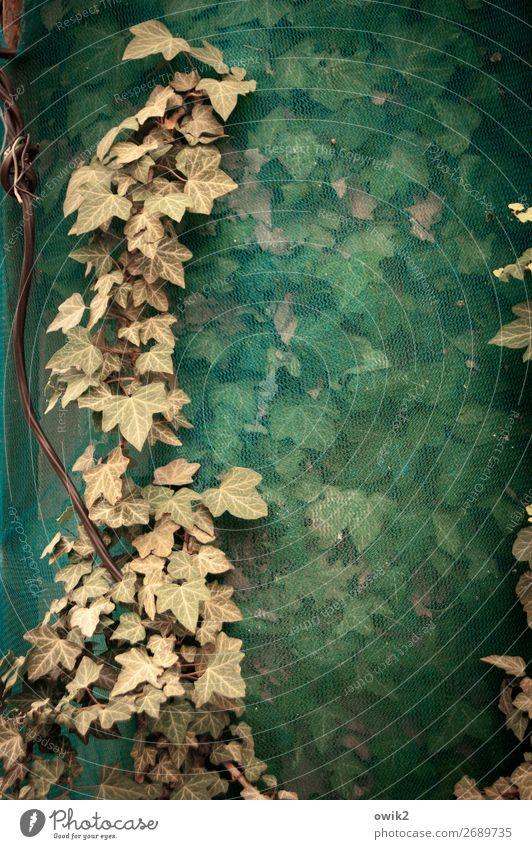 Versteckspiel Pflanze Blatt Herbst klein Zusammensein Wachstum trist Baustelle Schutz trocken Kunststoff nah Efeu Abdeckung dehydrieren