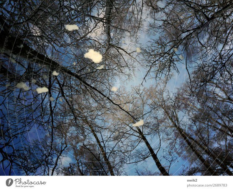 Von oben Umwelt Natur Landschaft Himmel Winter Schnee Schneefall Baum Baumstamm Zweige u. Äste blau durcheinander Farbfoto Außenaufnahme Detailaufnahme
